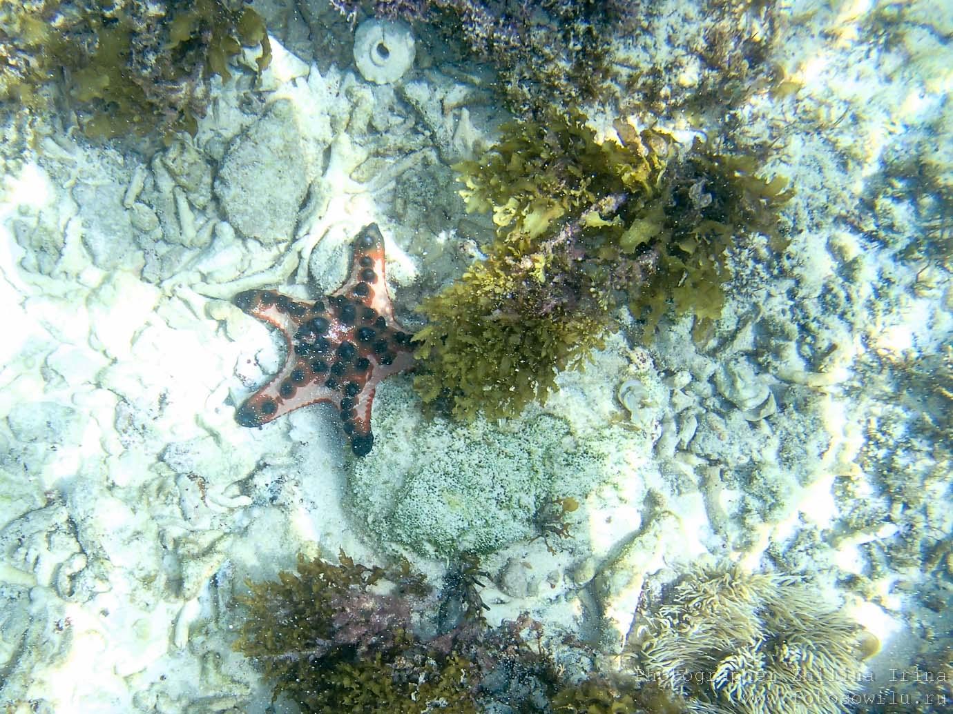 Алона Бич, Панглао, морские звезды, Филиппины, Alona beach