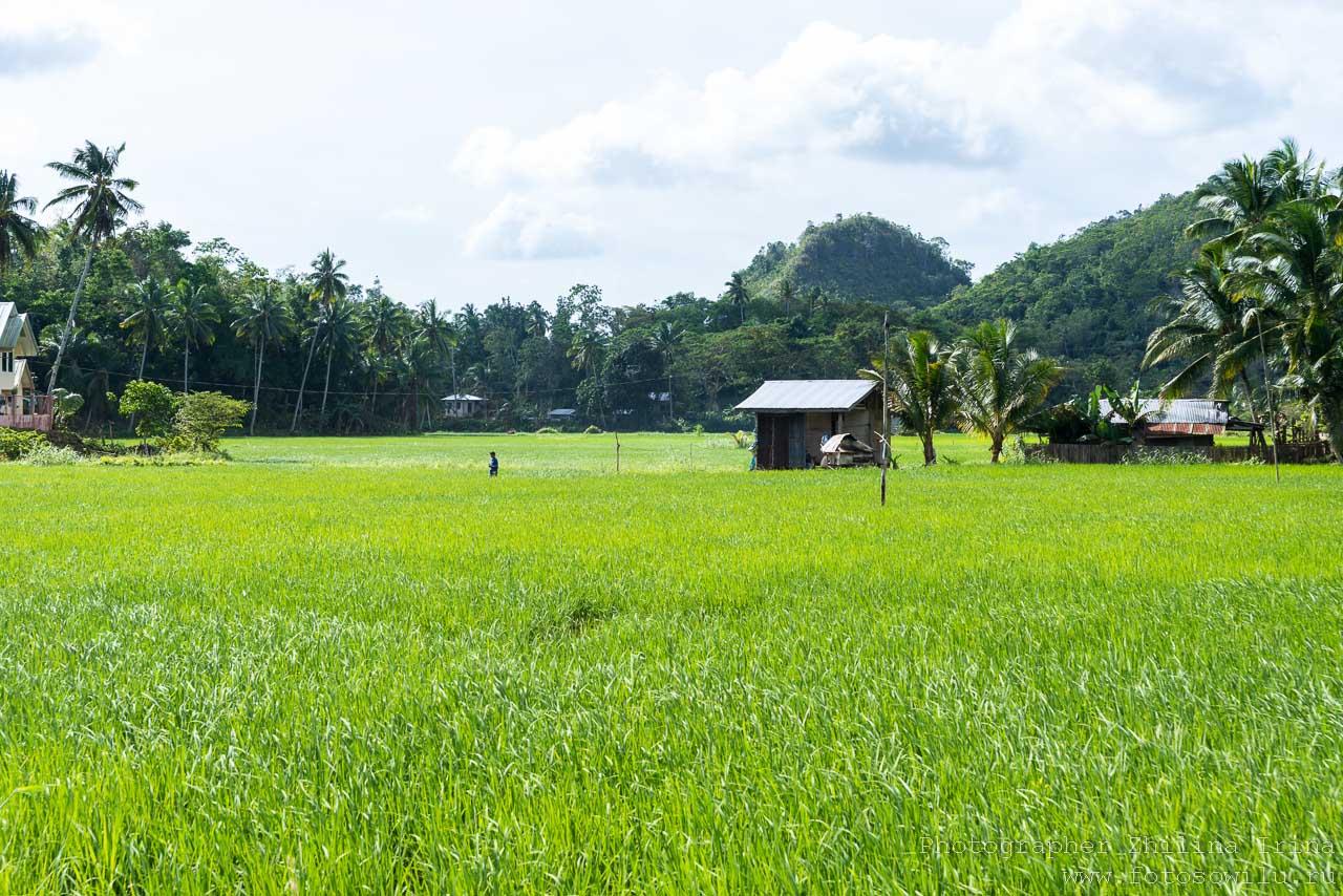 Остров Бохоль, по Бохолу на мопеде, путешествие по Филиппинам, что смотреть на Филиппинах, что смотреть на Бохоле, рисовые поля