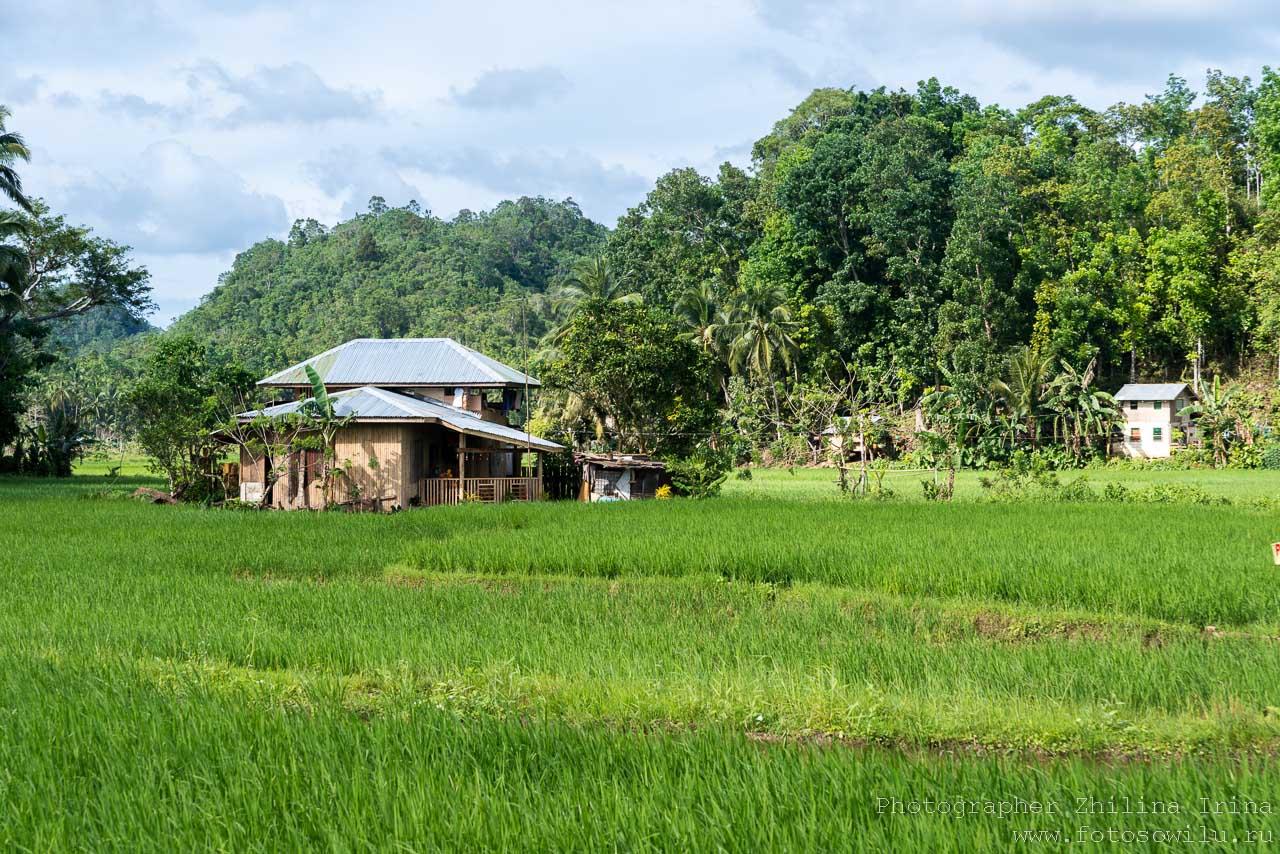 Остров Бохол, по Бохолу на мопеде, путешествие по Филиппинам, что смотреть на Филиппинах, что смотреть на Бохоле, рисовые поля