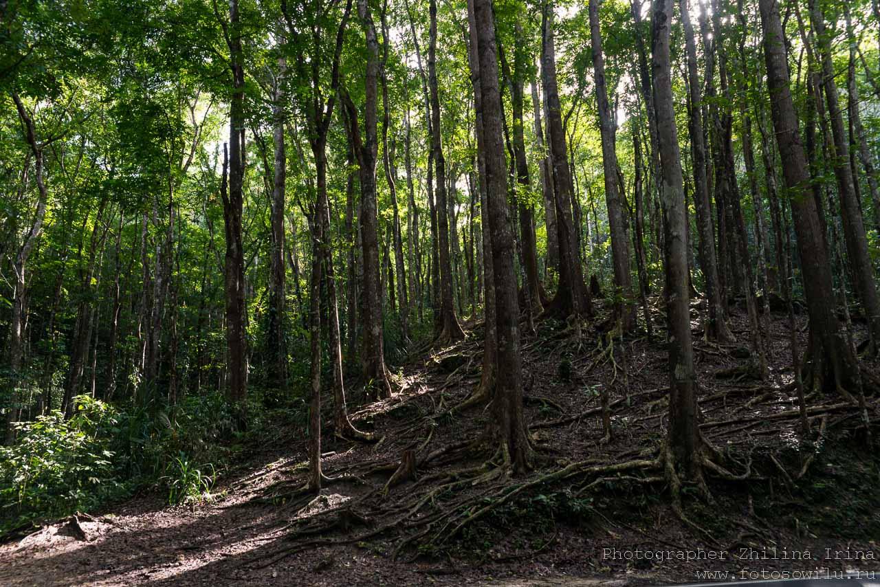 Остров Бохол, Шоколадные Холмы, путешествие по Филиппинам, что смотреть на Филиппинах, что смотреть на Бохоле, Бохол