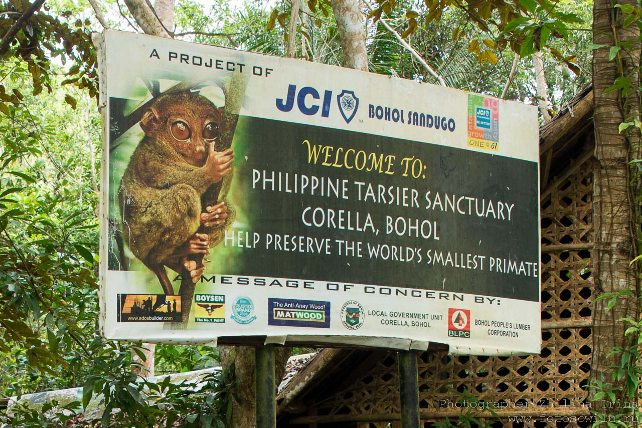 Остров Бохоль,Трасиеры (Долгопяты), Шоколадные Холмы, путешествие по Филиппинам, что смотреть на Филиппинах, что смотреть на Бохоле, Бохол