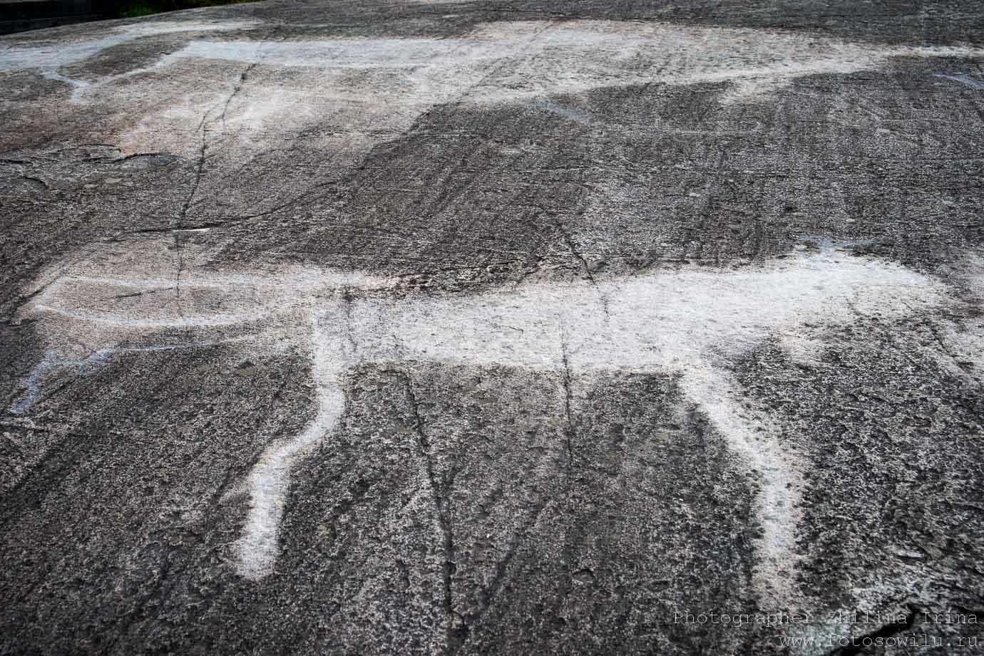Беломорские петроглифы, охота на оленя, туры по России, что смотреть в России, своим ходом по России, на машине по России, куда поехать на машине